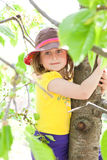 Grimper à l'arbre Photos stock
