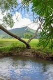 Grimpeur au-dessus du ruisseau Image libre de droits