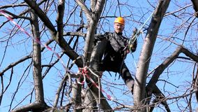 Grimpeur d'arbre parmi des branches banque de vidéos