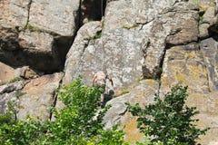 Grimpeur d'homme s'élevant sur une roche images stock