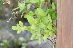 Grimpeur de jardin Photo libre de droits