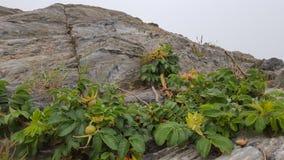 Grimpeur de montagne Image libre de droits