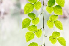 Grimpeur vert de feuille Photo libre de droits