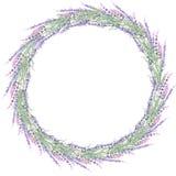 Grinalda da alfazema Fotos de Stock