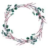 Grinalda da aquarela de ramos diferentes do eucalipto ilustração royalty free