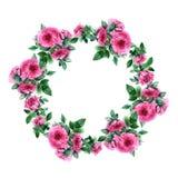 Grinalda da flor de Rosa Beira floral do círculo Quadro da aquarela Imagens de Stock Royalty Free