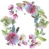 Grinalda da flor do crisântemo do Wildflower em um iso do estilo da aquarela ilustração stock