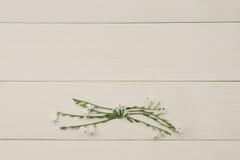 Grinalda da flor gangetic de Asystasia Foto de Stock Royalty Free
