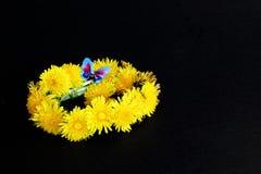 Grinalda da mola de flores amarelas do dente-de-leão com a borboleta decorativa azul brilhante no fundo preto Mola do †simbólic imagem de stock royalty free