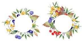 Grinalda das bagas do rasgado, viburnum e mar-espinheiro cerval Imagem de Stock
