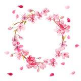 Grinalda das flores da cereja pintadas na aquarela Fotografia de Stock Royalty Free
