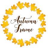 Grinalda das folhas de bordo alaranjadas secas Quadro redondo outonal em um fundo branco Foto de Stock Royalty Free