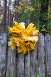 Grinalda das folhas de bordo amarelas na cerca de madeira Backg natural imagens de stock royalty free