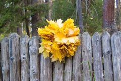 Grinalda das folhas de bordo amarelas na cerca de madeira Backg natural imagem de stock