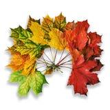 Grinalda das folhas de bordo caídas isoladas no branco com sombras Foto de Stock