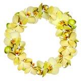 Grinalda do amarelo da orquídea isolada no branco Fotos de Stock Royalty Free