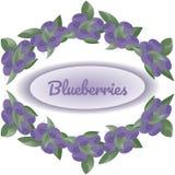 Grinalda dos arbustos dos mirtilos no fundo branco, no centro texto Blueberryies ilustração do vetor