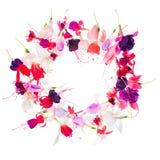 A grinalda fúcsia da flor com lugar para sua texto ou imagem é isola Imagem de Stock