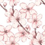 Grinalda floral 4 da aquarela Isolado no fundo branco Fotografia de Stock Royalty Free
