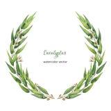 Grinalda redonda do vetor da aquarela com as folhas e ramos verdes do eucalipto Imagens de Stock Royalty Free