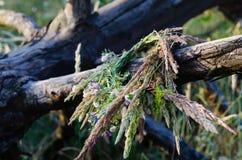 Grinalda tradicional de ervas e de flores do campo em um tronco de árvore seco velho Coleção e preparação para o rito da celebraç foto de stock royalty free