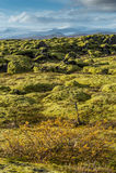 Grindavik在绿色青苔盖用黄色植物前景和雪山背景的冰岛的熔岩荒野 免版税库存图片