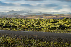 Grindavik Lava field at Iceland that cover by green moss with asphalt road foreground and snow mountain background Royalty Free Stock Photography