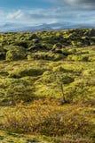 Grindavik-Lavafeld bei Island, das durch grünes Moos mit gelbem Betriebsvordergrund und Schneegebirgshintergrund bedecken Lizenzfreies Stockbild