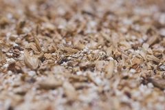 Grinded grains of barley malt close-up. Craft beer brewing from stock image