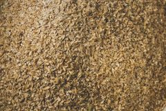 Grinded grains of barley malt close-up. Craft beer brewing from stock photography