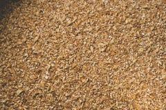 Grinded grains of barley malt close-up. Craft beer brewing from. Grain barley pale malt in process. Ale or lager from pilsner malt Stock Photo