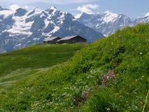 Grindelwald royalty-vrije stock foto