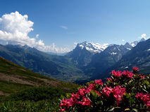 Grindelwald Fotografia Stock Libera da Diritti