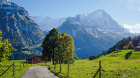 Grindelwald village , Switzerland. Grindelwald village view with the Mountain, Switzerland Royalty Free Stock Image