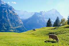 Grindelwald village , Switzerland. Grindelwald village view with the Mountain, Switzerland Stock Photography