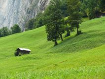 Grindelwald zwitserland Panoramische mening Alpes stock foto