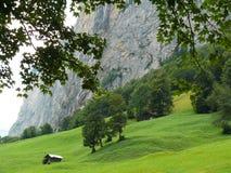 Grindelwald zwitserland Panoramische mening Alpes royalty-vrije stock afbeeldingen