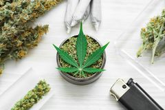 Grinder with crushed Joint and a weed Leaf of cannabis, buds of marijuana, unrolled weed on a white wooden background top view. Sticky buds of marijuana flowers royalty free stock images