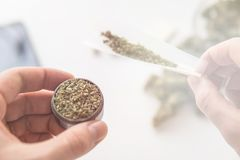 Grinder on hand and unrolled joint weed and Cannabis marijuana top view light leaks color. Tones royalty free stock photos