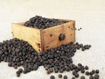 grinder pepper Στοκ εικόνες με δικαίωμα ελεύθερης χρήσης