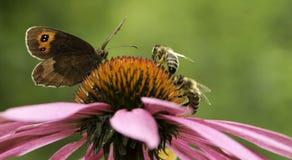 Grindvaktarefjäril och två bin Arkivbilder