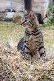 Grinning Cat Royalty Free Stock Photos