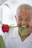 Grinning senior man with rose stem in mouth Stock Image