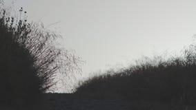 Grintweg bij Schemer stock videobeelden