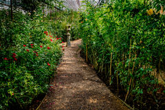 Grintweg in de tuin Royalty-vrije Stock Fotografie