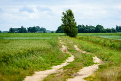 grintweg in de zomerplatteland Stock Foto's