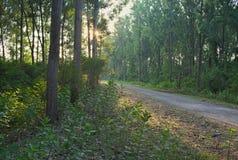 Grintweg die door bos tijdens zonsondergang gaan royalty-vrije stock fotografie