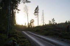 Grintweg door een bos door schemering Stock Fotografie