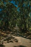 Grintweg door gevoerde bomen in de schaduw die wordt gesteld die stock fotografie