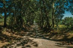 Grintweg door gevoerde bomen in de schaduw die wordt gesteld die royalty-vrije stock afbeelding